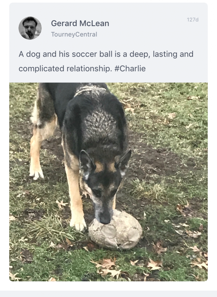 A dog and his soccer ball is a complicated relationship...photo from a tournament app